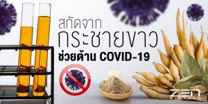 สมุนไพรไทยสุดเจ๋ง!! พบสารสกัดจากกระชายขาว ช่วยต้าน COVID-19
